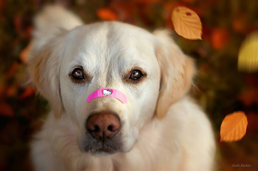 I-love-my-dogs-nose__880