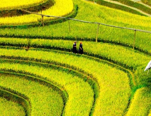 -mu-cang-chai-rice-fields-on-terraced-001